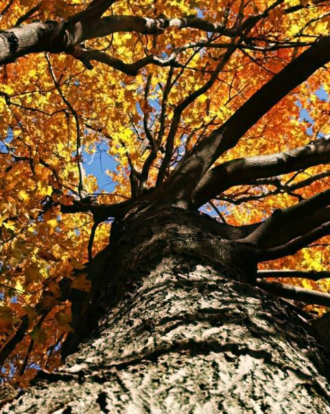 httpswww.outdoorlife.comsitesoutdoorlife.comfilesimport2014importImage2009photo7Decfoliage_26.jpeg