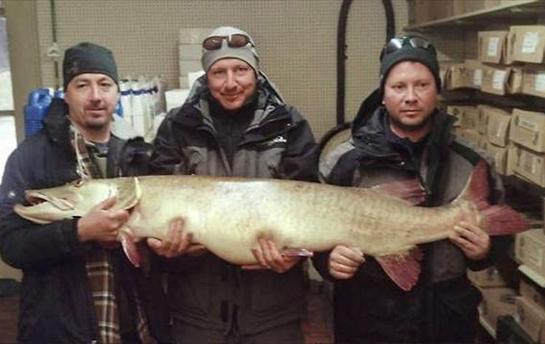 Michigan Angler Lands 58-Pound State Record Muskie