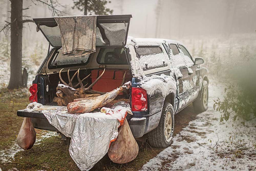 butchered elk in the back of truck