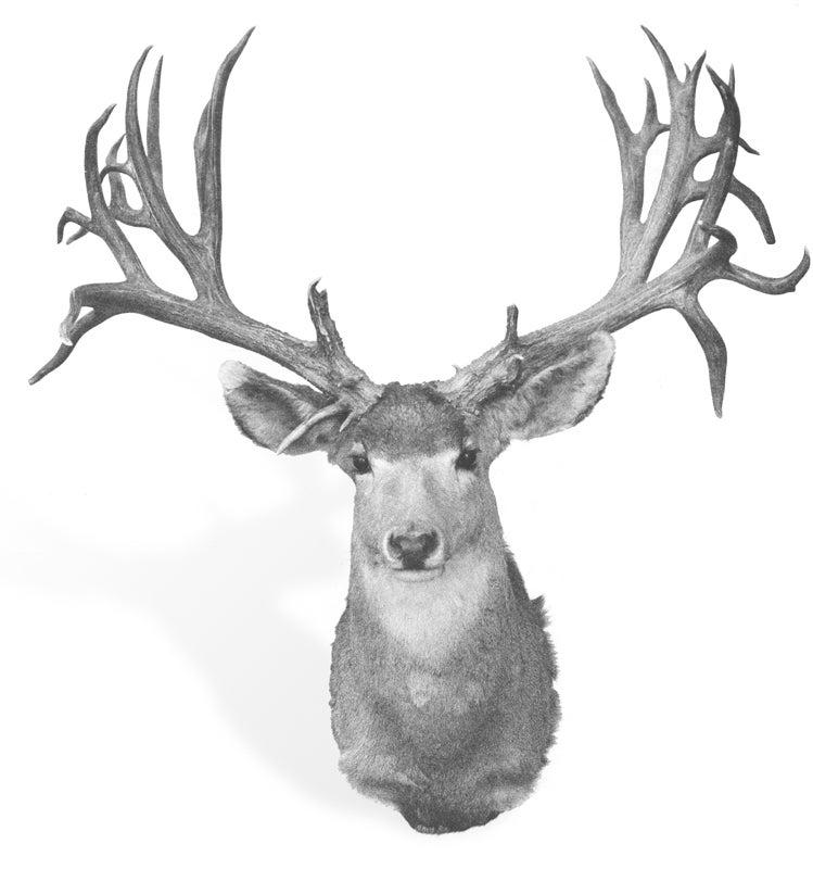 Boone & Crockett Club record mule deer