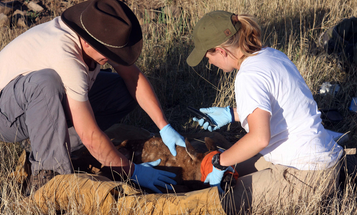 A Q&A with 4 Wildlife Biologists: Insights About Criticism, Game Populations, and Paperwork