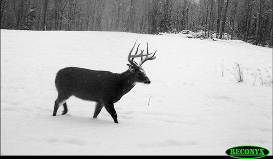 Whitetails This Weekend: Get On The Food