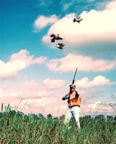 httpswww.outdoorlife.comsitesoutdoorlife.comfilesimport2014importImage2009photo717._Missouri.jpg