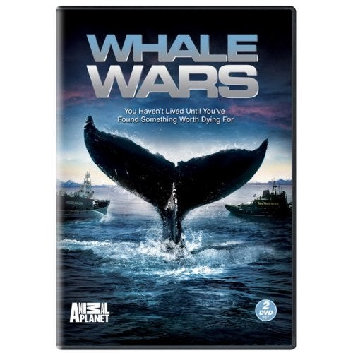 Gayne Watches Whale Wars to See Who is Watching Whale Wars