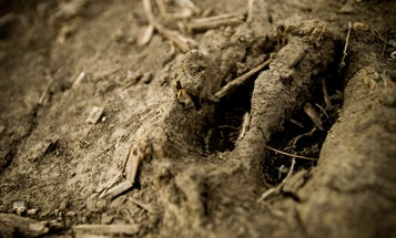 Growing Big Bucks: Why Soil is One of the Most Important Factors in Whitetail Management
