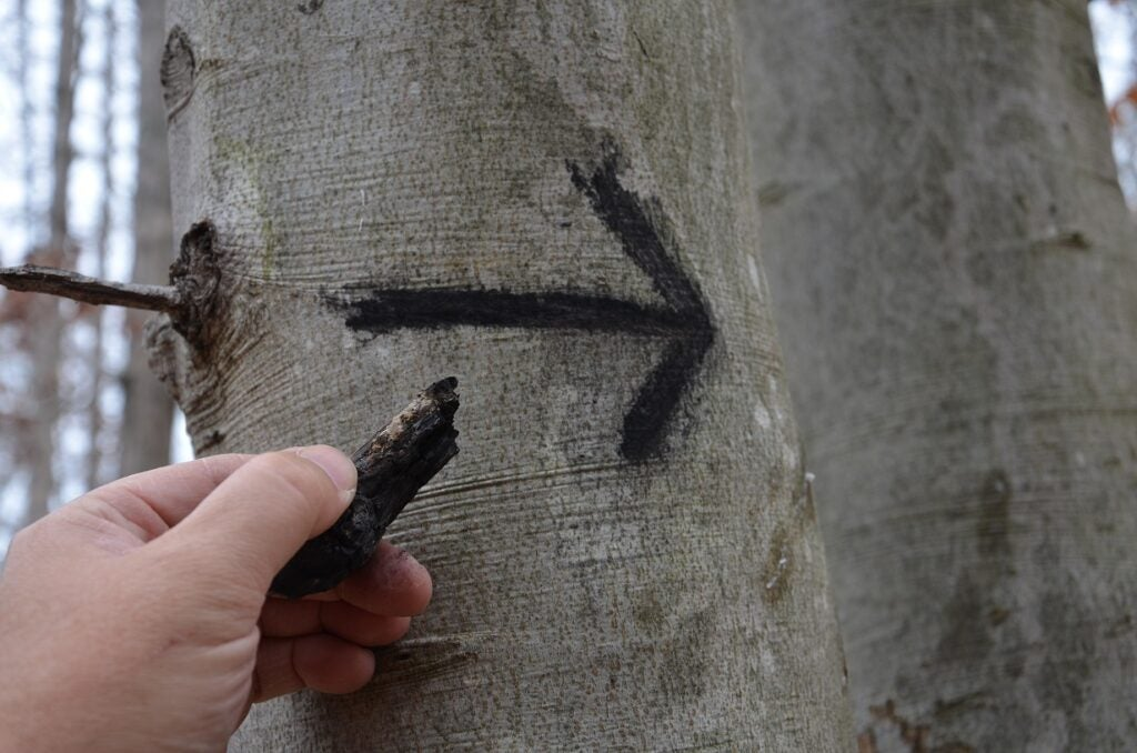 charcoal signals on a tree