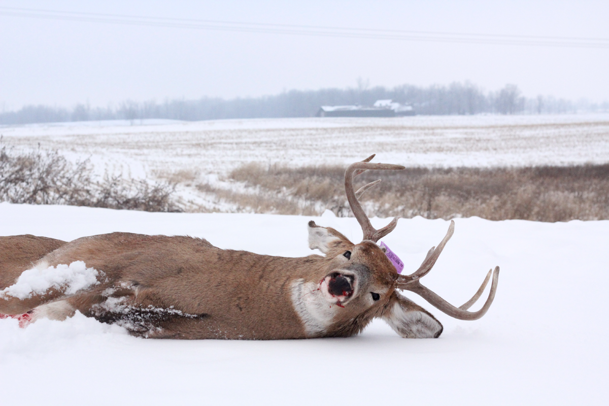 The Coming Weeks of Deer Hunting Could Be Better Than the Rut
