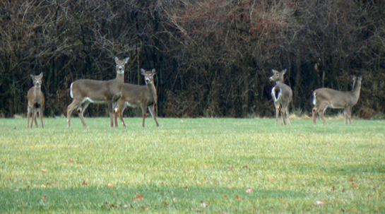 Early Spring Could Mean Trouble For Deer This Fall