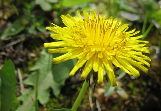 Survival Training with the Department of Justice: 4 Weeds You Can Eat Almost Anywhere