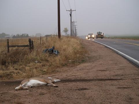 httpswww.outdoorlife.comsitesoutdoorlife.comfilesimport2013images201102Road_Kill_deer_0.jpg