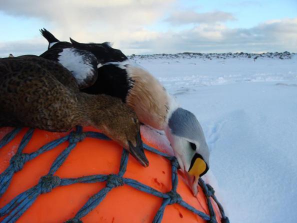 Setting Hunting Season Goals