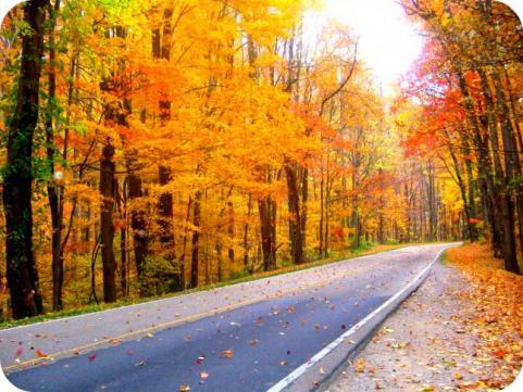 httpswww.outdoorlife.comsitesoutdoorlife.comfilesimport2014importImage2009photo7Decfoliage_17.jpg