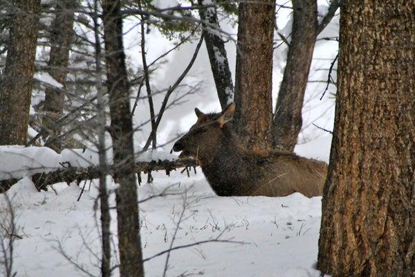 httpswww.outdoorlife.comsitesoutdoorlife.comfilesimport2013images201012slide26_0.jpg