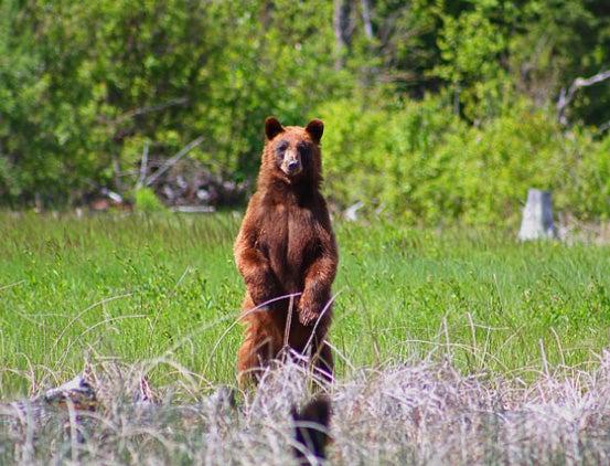 httpswww.outdoorlife.comsitesoutdoorlife.comfilesimport2014importImage2010photo30010AprilVokey_07.jpg