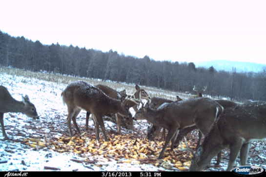 Do Your Deer Still Have Their Antlers?