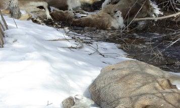 Winter Kill Forecast: Will Harsh Conditions Devastate Colorado Deer and Elk?