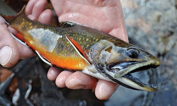 What this West Virginia Angler is Doing to Restore Brook Trout