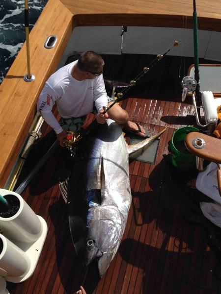 World Record Yellowfin Tuna Caught in Puerto Vallarta?