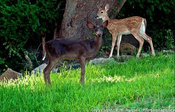 httpswww.outdoorlife.comsitesoutdoorlife.comfilesimport2013images2010094_Screen_shot_2010-09-14_at_2.35.31_PM_0.jpg
