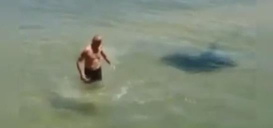 """""""Charging"""" Stingray Video Was a Hoax"""
