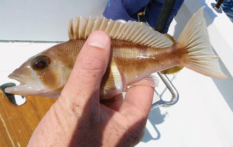 httpswww.outdoorlife.comsitesoutdoorlife.comfilesimport2013images201104140-0411fish_facts_07_0.jpg