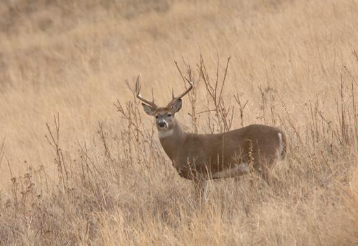 """""""buck"""