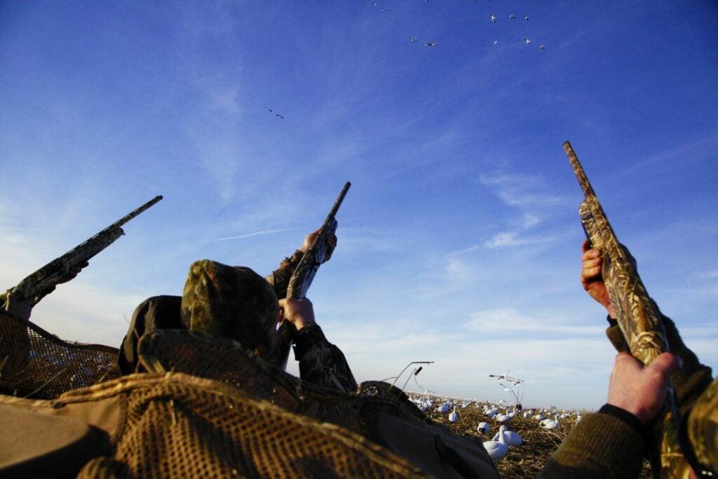 snow geese hunting blind