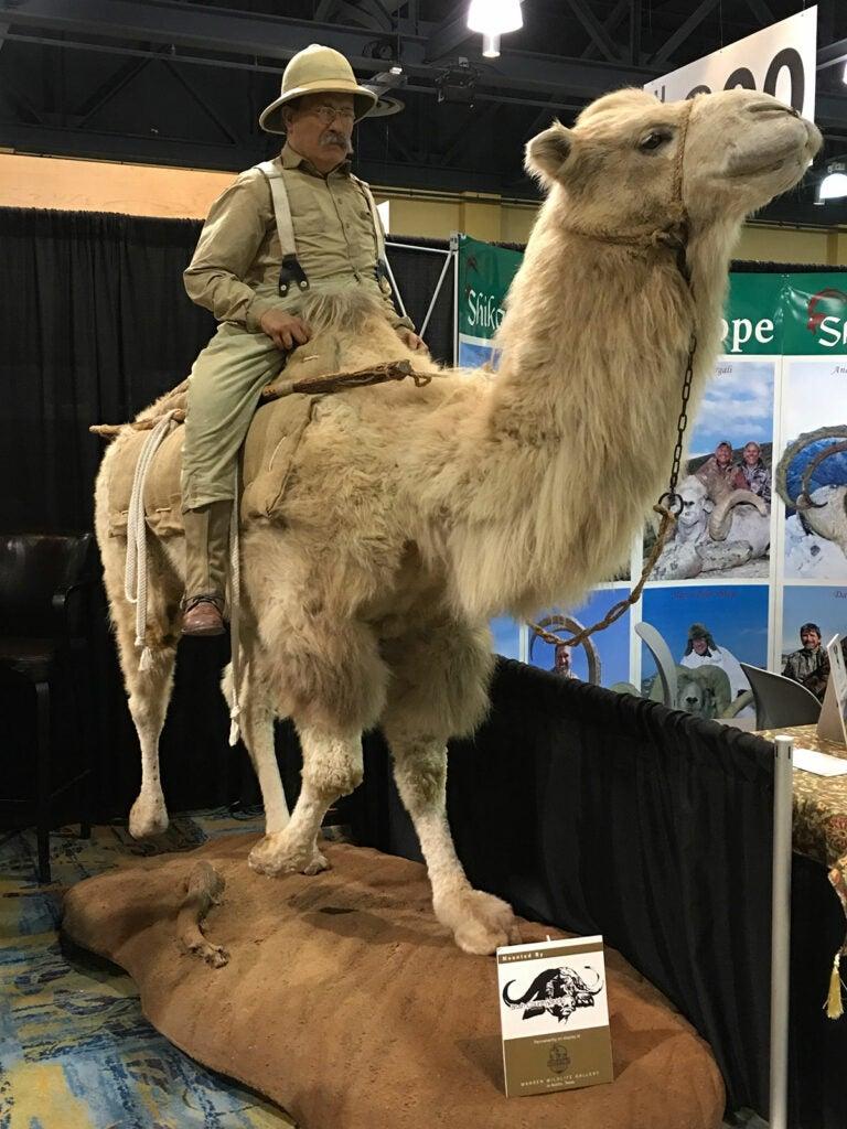 Teddy Roosevelt on camel mount