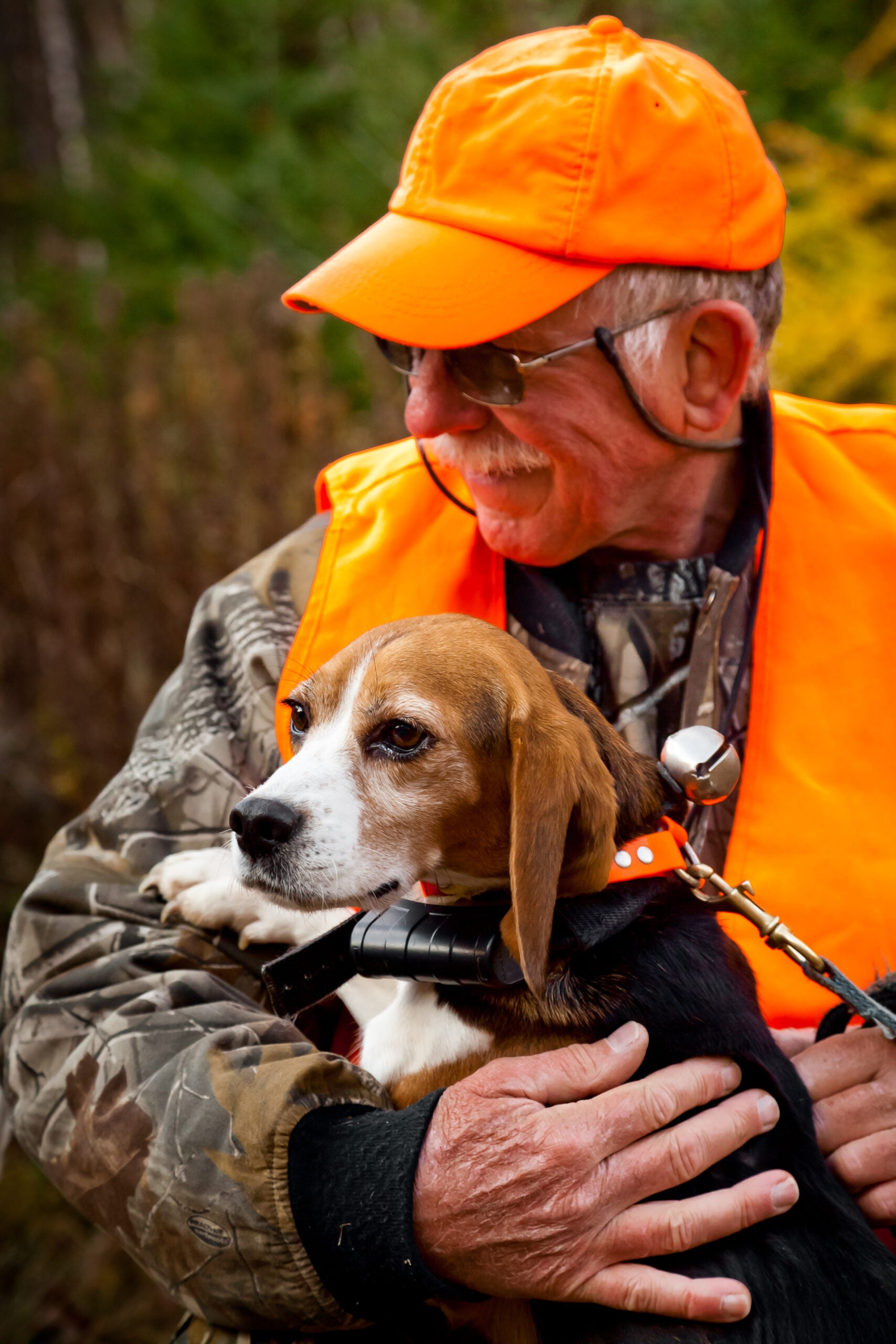 How to Find a Hunting Dog at the Pound