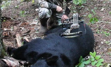 Fall Black Bear Hunting Tips for Gear, Stands, and Strategies
