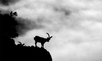 El Macho: A Crossbow Hunt for Spanish Ibex