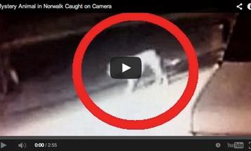 Video: Mystery Predator Caught on Camera in California