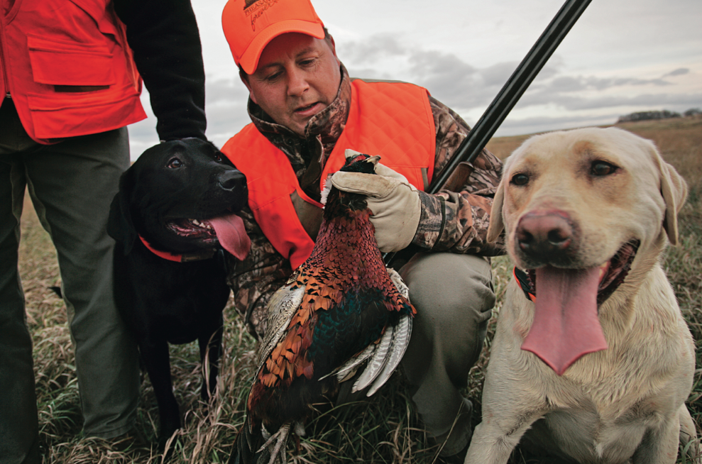 Happy-Hour Roosters: How to Find Pheasants at the End of the Day