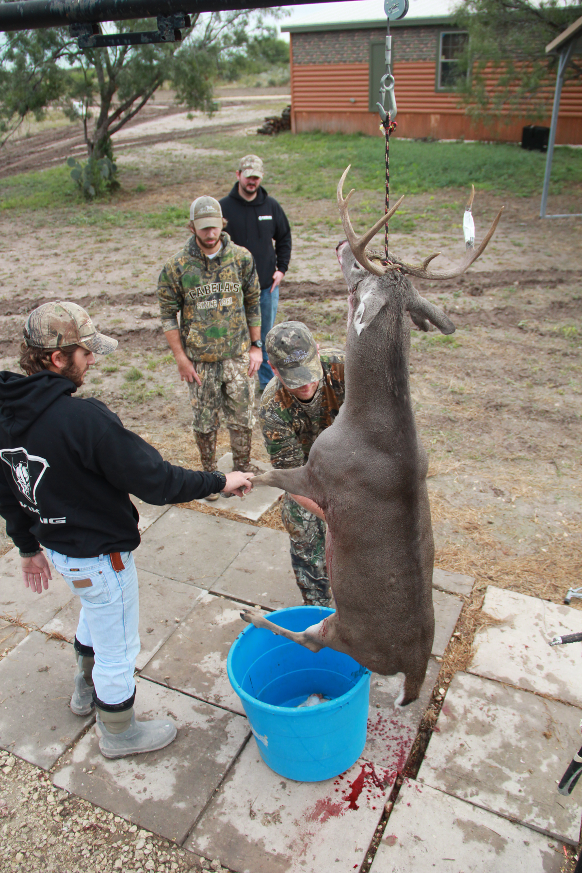 This Side Up: What's the Best Way to Hang a Deer?
