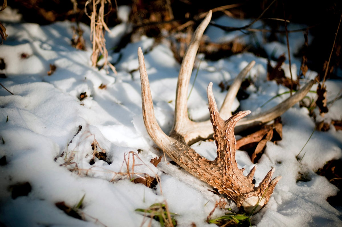 Deer Season Prep: 5 Projects for When the Snow Clears