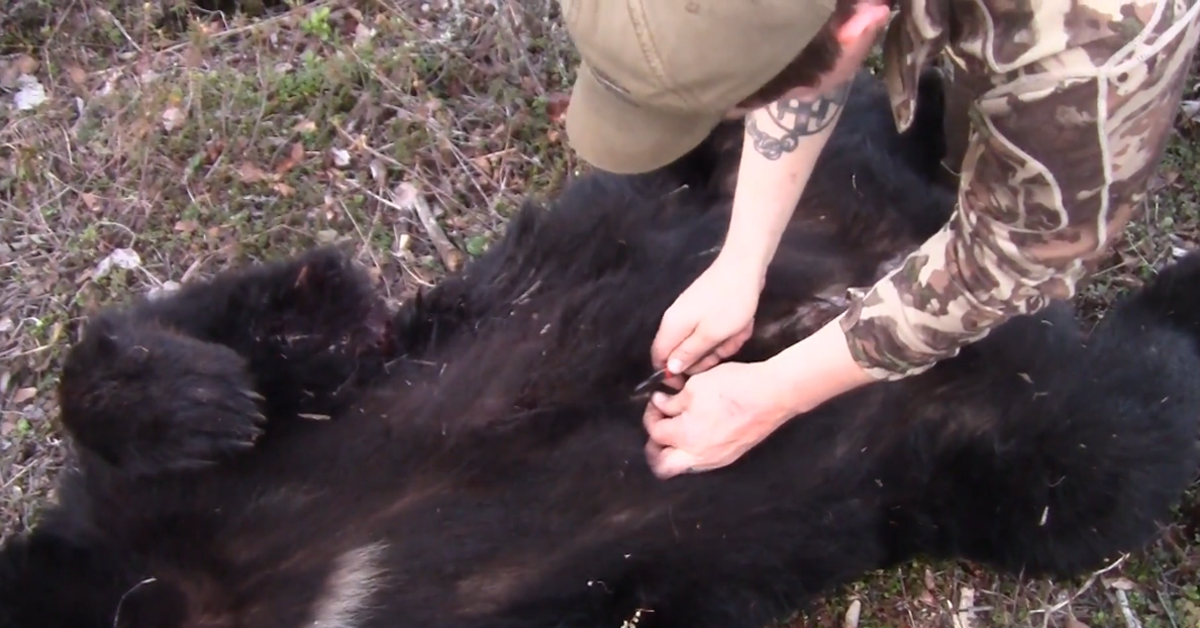 Video Tip: How to Skin a Bear in the Field