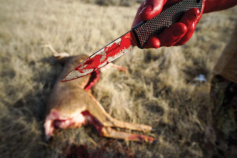 field dressing a buck