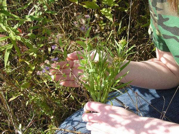 httpswww.outdoorlife.comsitesoutdoorlife.comfilesimport2014importImage2009photo7DSCN0548.JPG