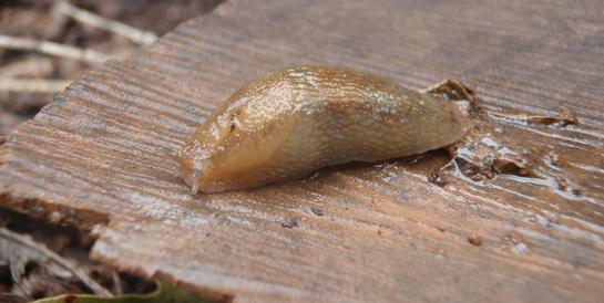 Survival Food: 5 Ways to Eat Snails and Slugs