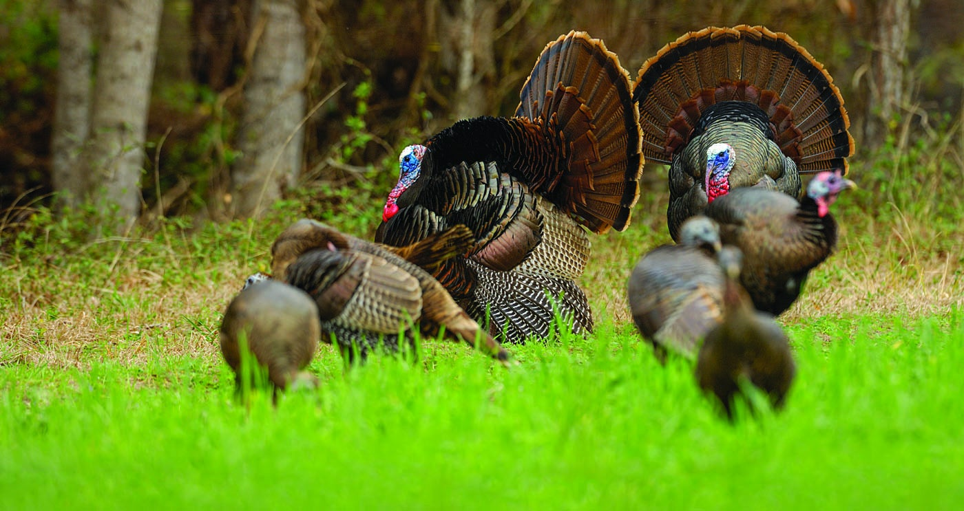 The Mother Flock: Hunting the Homeland of the Wild Turkey