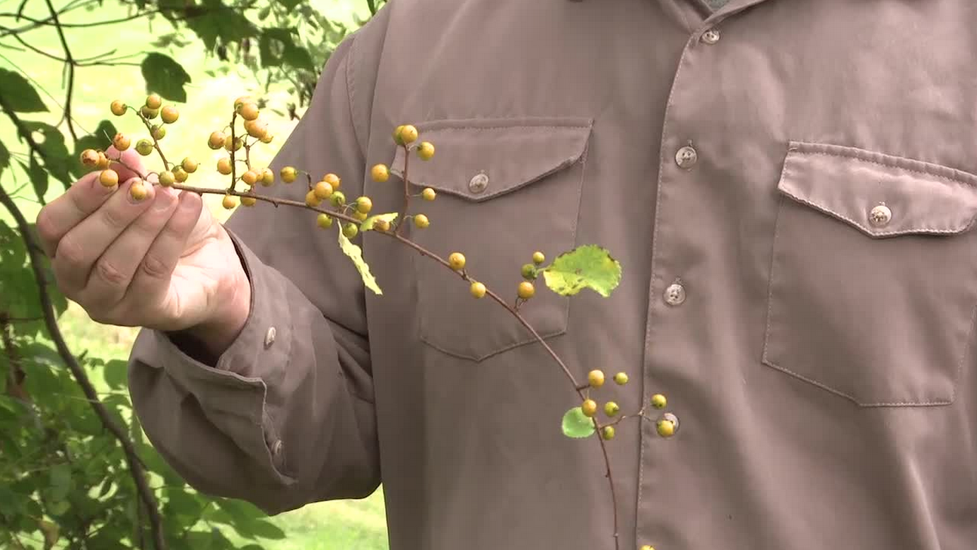 Survival Video: How to Identify 5 Wild Poisonous Plants