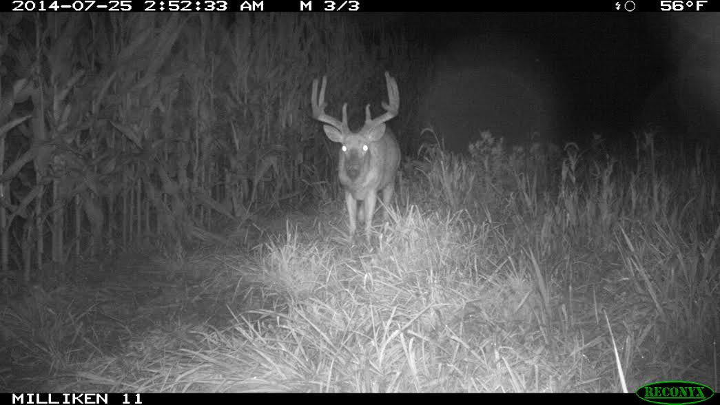 Summer Scouting: Take Inventory Without Spooking Bucks