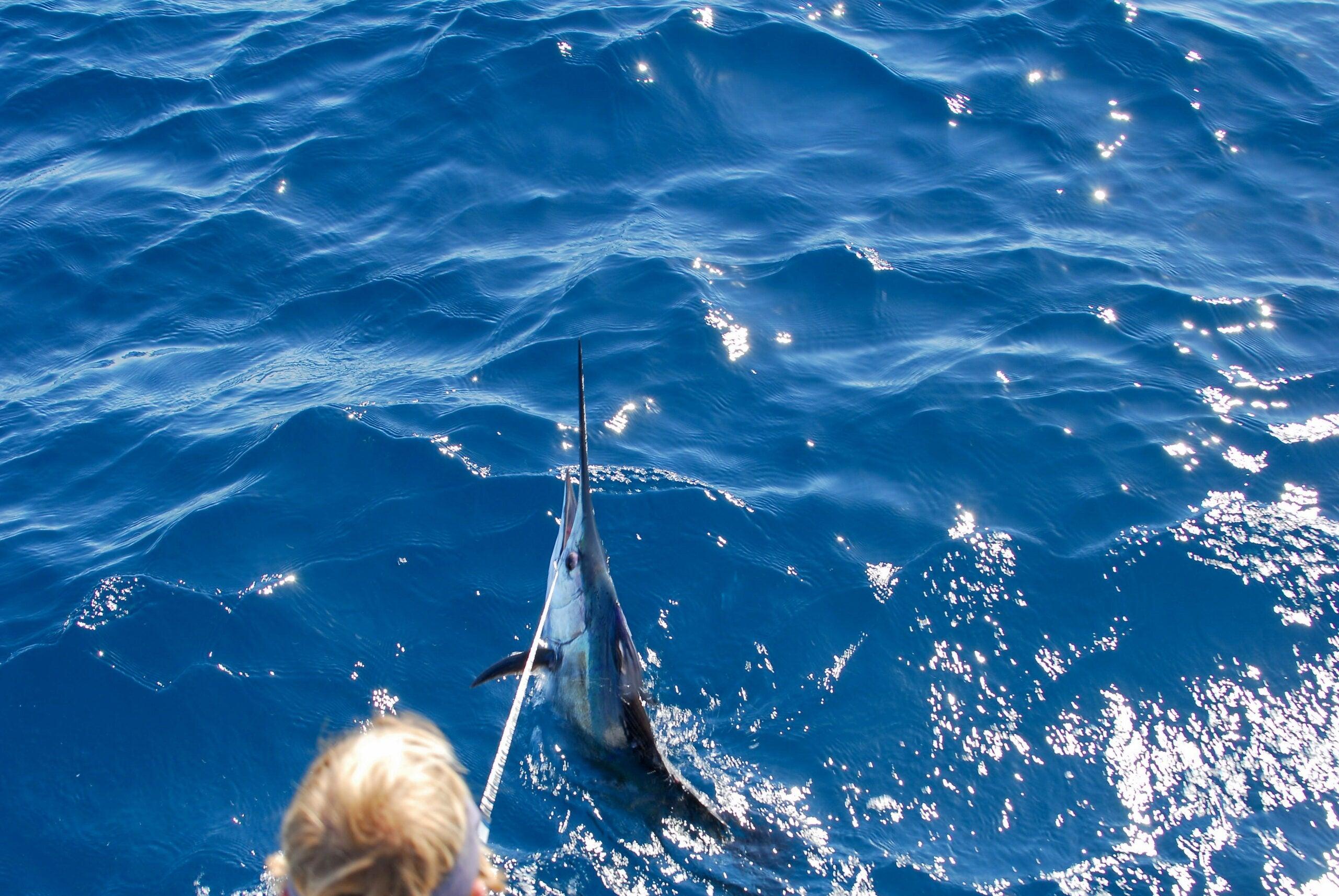 Red Hot Sailfish