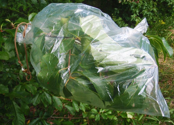 Survival Skills: Use a Plastic Bag to Collect Water