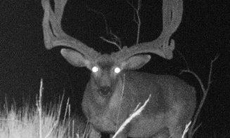 Photos: 239-Inch Mule Deer From the Arizona Strip