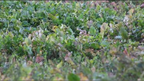 Target Big Bucks Video: Understand Food Per Acre
