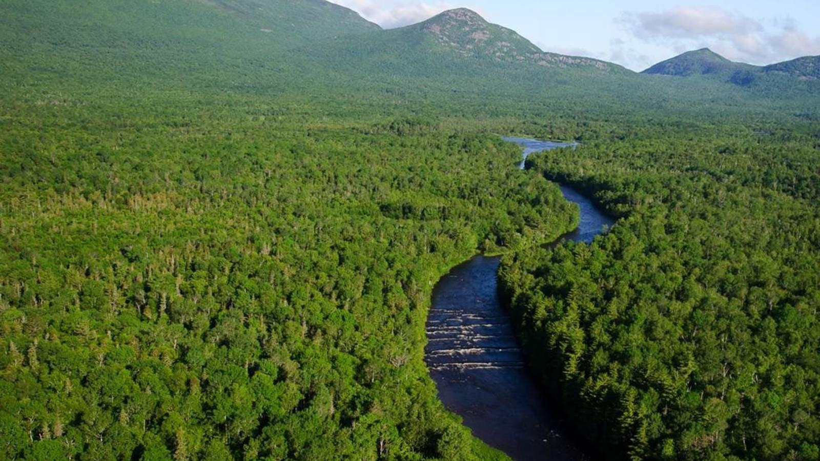 East Branch Penobscot Katahdin stream woods