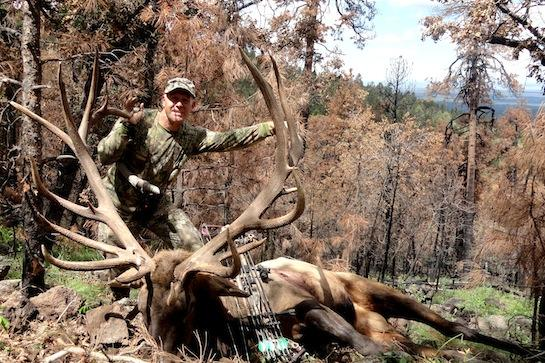 Huge Bull Elk Taken in Arizona, Could Rank Second in Pope and Young