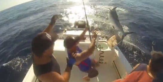Video: Black Marlin Leaps Into Boat, Scatters Anglers