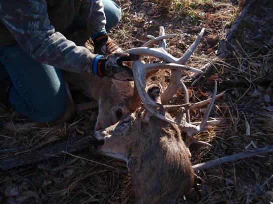 Video: Students Rescue Buck Locked to Another Buck's Severed Head